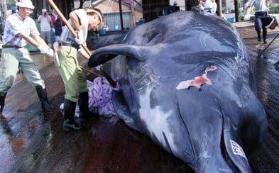 Japonci s pokusem o povolení komerčního lovu velryb neuspěli