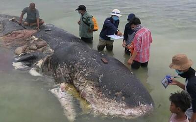 Japonci už zabili první velrybu. Teprve nedávno obnovený komerční lov už má svou oběť