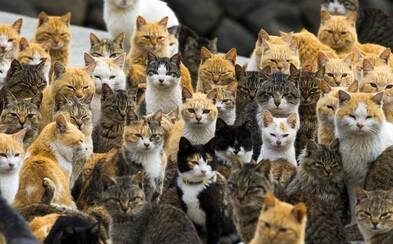 Japonci vyslyšeli prosbu na Twitteru a zachránili hladovějící obyvatele kočičího ostrova