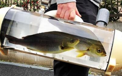 Japonská spoločnosť vyvinula prenášadlo na ryby. Vyvolalo to zmiešané reakcie