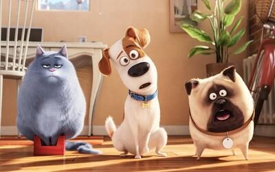 Je Tajný život mazlíčků tak skvělý, jak jsme očekávali, nebo budete z kina odcházet zklamaní? (Recenze)