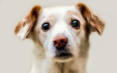 Jeden ľudský rok sa nerovná siedmim psím. Rozšírený mýtus je podľa expertov poriadna hlúposť