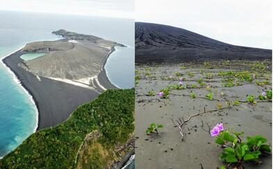 Jeden z nejnovějších ostrovů na Zemi už ovládl pestrý život. Vědci z NASA se ho vydali navštívit