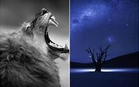 Jedinečné fotografie, které zabojují o prvenství v soutěži od National Geographic