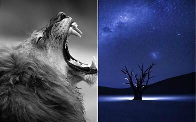 Jedinečné fotografie, ktoré zabojujú o prvenstvo v súťaži od National Geographic