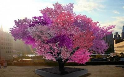 Jediný strom, na ktorom rastie 40 druhov ovocia