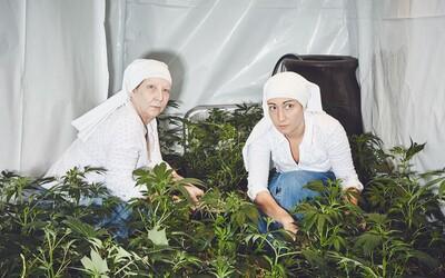 Jeptišky pěstují marihuanu, aby lidi vyléčily z bolesti zad, migrény a dokonce i opice