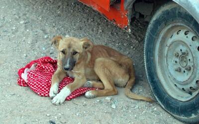 Jozef chytil psa pod krk, hodil ho na cestu a následne zviera udrel do hlavy