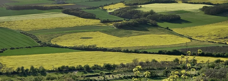 K Pac-Manovi v řepce se přihlásila skupina Ztohoven. Vytvořila jej v poli, kde hospodaří Agrofert