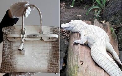 Kabelka od Hermès sa vydražila za neuveriteľných 377 000 $. Kúsok z bieleho krokodíla ozdobený diamantmi tak porazil svoj vlastný rekord