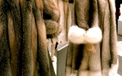 Kalifornia zakázala výrobu a predaj zvieracej kožušiny. Guvernér tvrdí, že sú lídrom v dobrých životných podmienkach pre zvieratá