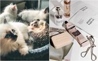 Kalifornie je prvním americkým státem, který zakázal kosmetiku testovanou na zvířatech