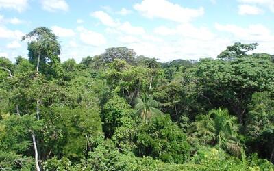 Každou minutu z amazonského pralesa zmizne plocha jednoho fotbalového hřiště