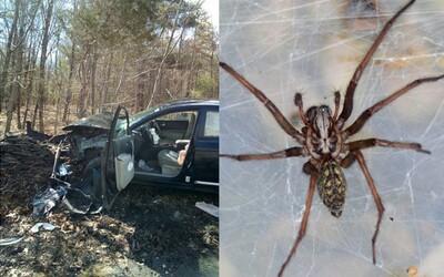 Když žena spatřila v autě pavouka, vyletěla ze silnice a poslala svůj vůz do šrotu