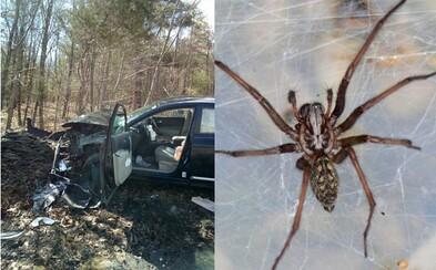 Keď žena za volantom v aute zbadala pavúka, vyletela z cesty a rozbila ho na totálku