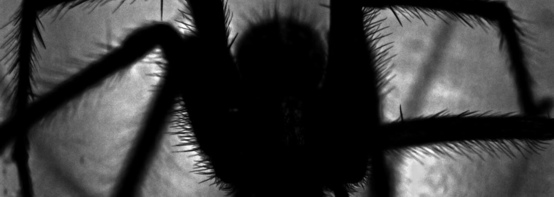 Kedy doma najpravdepodobnejšie uvidíš pavúka?