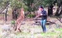 Klokan mu škrtil psa, tak ho chlapík udeřil silným pravým hákem. Zvíře po úderu rychle pochopilo, kdo je tady pán