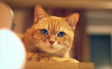 Kočky se mohou nakazit koronavirem, uvádí studie. Psi jsou proti viru odolnější