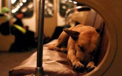 Kočovné psy moskovského metra