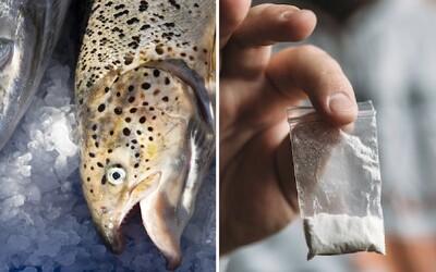 Kokaín, ketamín alebo MDMA našli v každej rybe, ktorú testovali. Briti majú problém s epidémiou zdrogovaných živočíchov