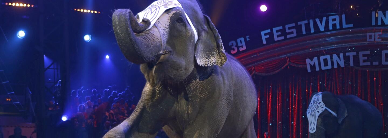 Konec cirkusů s exotickou zvěří v Brně? Občané rozhodnou v anketě