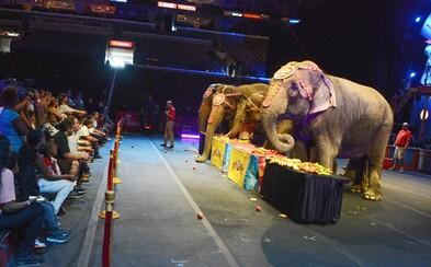 Konec týrání zvířat v českých cirkusech? Ministerstvo navrhlo úplný zákaz jejich vystavování a drezury