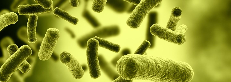 Koniec pokazeným potravinám? Chladnička za pomoci laseru dokáže rozpoznať nejedlé baktérie