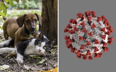 Koronavirus mohou dostat i psi a kočky, potvrzují nizozemské úřady