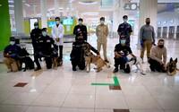 Koronavirus na dubajském letišti budou odhalovat psi. Dokáží ho vyčmuchat s 92% úspěšností