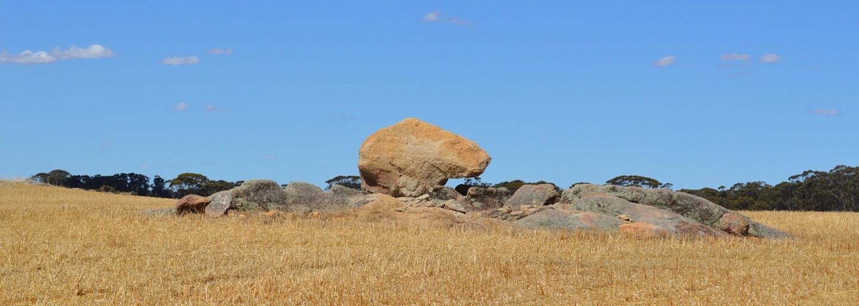 Kostra mrtvého klokana v Austrálii svědčí o hrozivém suchu, které kontinent postihlo