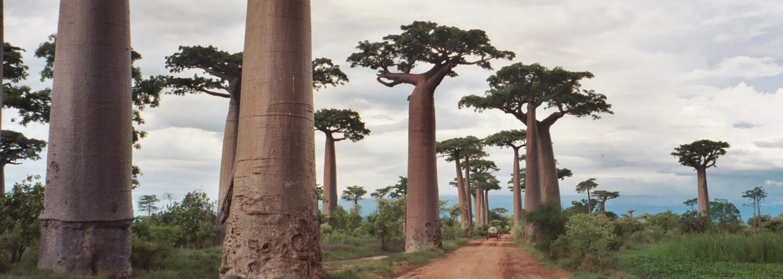 Krásy Země aneb 10 pozoruhodných lesů a oblastí, které by měl navštívit každý milovník přírody