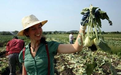 Křivá mrkev nebo příliš malá broskev? Iniciativa Zachraň jídlo se věnuje záchraně potravin, které by jinak skončily v koši (Rozhovor)