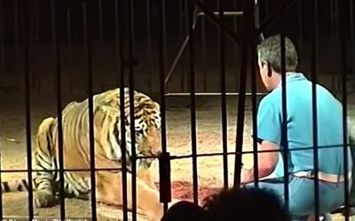 Krotitele v cirkuse zabili 4 tygři. Zraněním podlehl během převozu do nemocnice