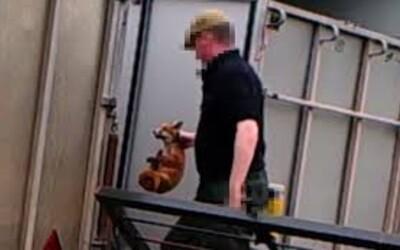Krutý lovec hádzal psom živé líščie mláďatá. Priamo pri čine ho natočili zvierací aktivisti na skrytú kameru