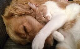 Kto je lojálnejší k majiteľovi – psy či mačky? Nová vedecká štúdia hľadala odpoveď