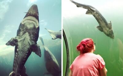 Kúsok od Slovenska sa nachádza unikátna atrakcia. Môžeš sa prechádzať v skoro 4-metrovej hĺbke priamo pod jazerom