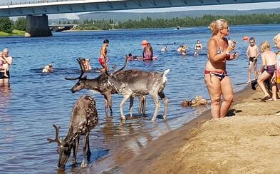 Kvôli extrémnym horúčavám sa na pláž prišli osviežiť aj soby. Kúpali sa a oddychovali v tieni