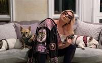 Lady Gaga nabízí 500 tisíc dolarů za návrat svých psů, které jí ukradli při ozbrojené loupeži