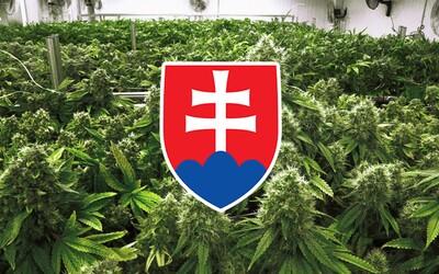 Lepší turizmus, nové podnikateľské príležitosti aj viac daní. 7 dôvodov, prečo na Slovensku legalizovať marihuanu