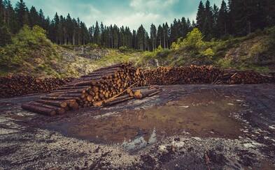 Lesné plochy vo vyspelých krajinách pribúdajú, naopak v rozvojových ubúdajú