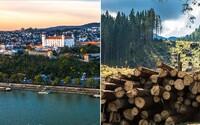 Lesy SR odignorovali ministerstvo a začali riskantnú ťažbu pri Bratislave. Zastaviť ju v poslednej chvíli museli až ľudia
