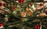 Letos si můžeš pořídit ekologický vánoční stromek. Je v květináči a po svátcích ho můžeš zasadit zpátky do lesa