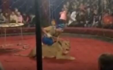 Levica v cirkuse zahryzla do tváre 4-ročného dievčatka, ktoré skončilo v kóme. Zvieraťu teraz hrozí usmrtenie
