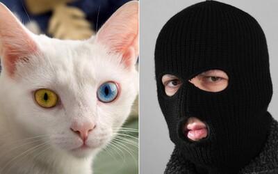 Lidé by zachránili radši kočku než zločince a mladší raději než seniory. Výsledky morálního experimentiu šokovaly i vědce