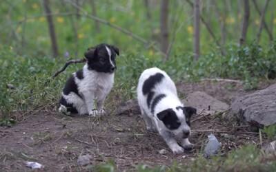 Lidé zachraňují radioaktivní psy z Černobylu. Po dekontaminaci si je můžeš adoptovat