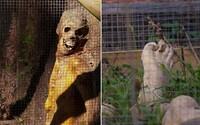 Lidské maso, kosti i části obličeje. Australská farma smrti pomáhá objasňovat ty nejkomplikovanější vraždy a policisté si ji nemohou vynachválit