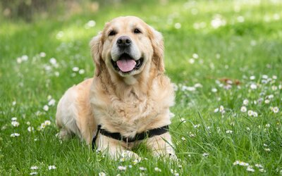 """""""Lidský věk"""" psa prý nezjistíš tak, že ten skutečný vynásobíš sedmi. Vědci zjistili, jak ho vypočítat přesně"""