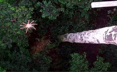 Lietajúce pavúky? Vedci v Južnej Amerike objavili zaujímavý druh pavúka, ktorý dokáže plachtiť