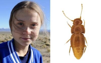 Londýnske múzeum pomenovalo novoobjaveného chrobáka po Grete Thunberg