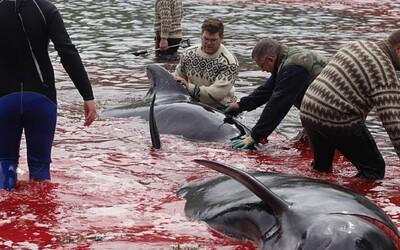 Lovci kruto zabili 23 veľrýb. More sa krvou sfarbilo dočervena